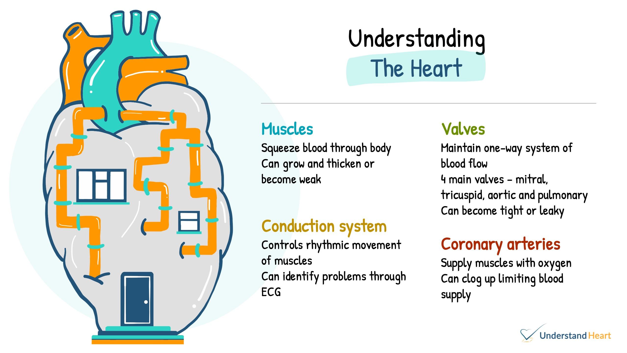visual summary understand heart